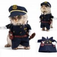 Ρούχα γάτας