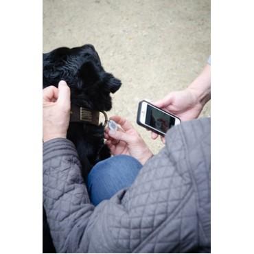 Ταυτότητα νέας γενιάς με qrcode spotted! dog and cat